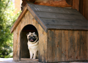 Doghouses: Why You Should Consider Investing In One