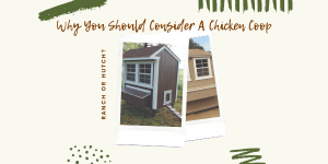 Why You Should Consider A Chicken Coop