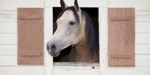 A List Of Things You May Want To Consider When Investing In A Horse Barn
